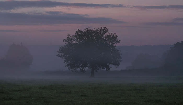 Oak MIst Marshwood Old Bidlake Farm Camping Bridport Dorset