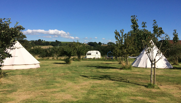 Old Bidlake Farm Bell Tent Camping Dorset The Orchard Area Bring your own Bell Tent