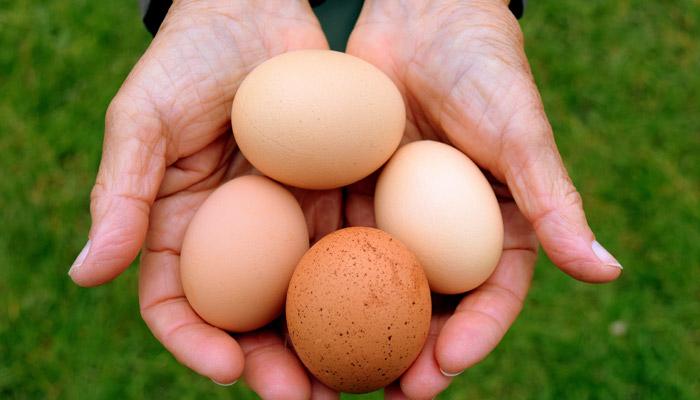 Old Bidlake Bell Tent Camping Dorset Chicken Eggs