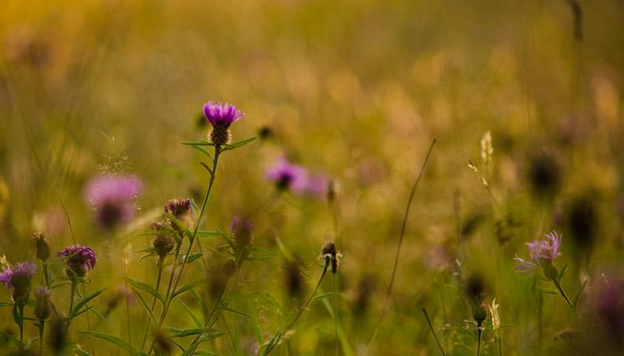 Old Bidlake Farm Camping Dorset Meadow