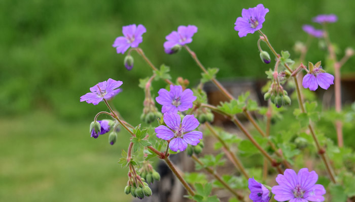 Old Bidlake Farm Campsite Bridport Dorset Parking Flowers
