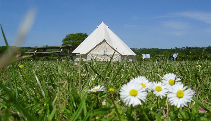 Bell Tent Daisies Old Bidlake Farm Bell Tent Camping Bridport Dorset