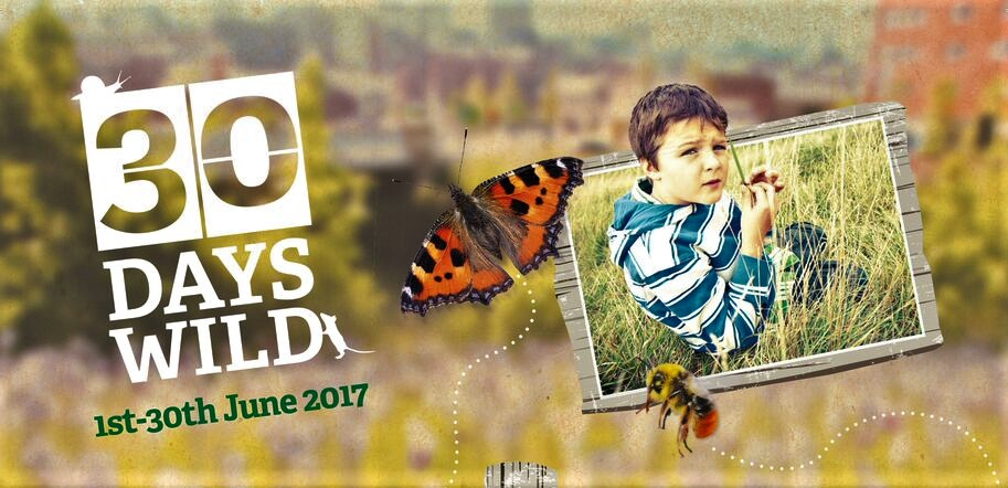 We're going '30 Days Wild' with the Wildlife Trust